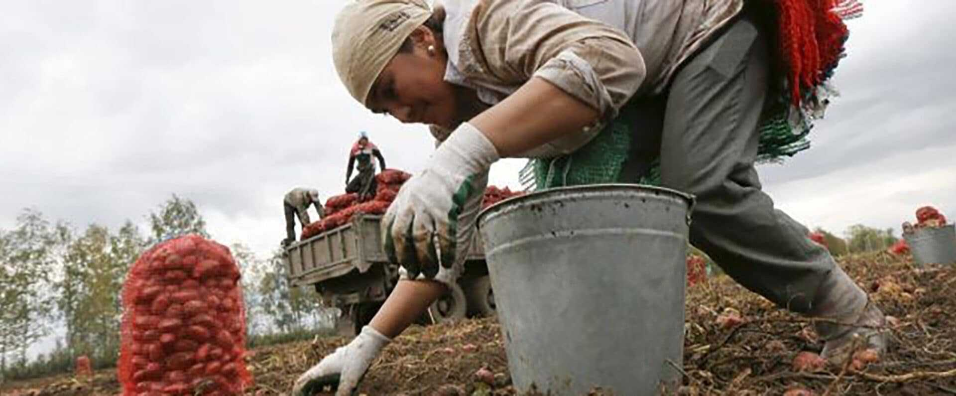 мигранты на сельхозработах в России
